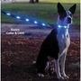 Collar Y Correa Luminosos Tipo Led Para Perros
