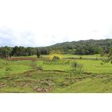 Se Vende Finca 384 Hect Preciosa Para Agricultura/ecoturismo