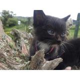 Se Dan En Adopcion 2 Gatitos.