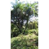 Bella Quinta En Bajamar , ¢34mill., 10.000 M2