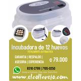 Incubadora 12 Huevos